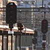 Signaler